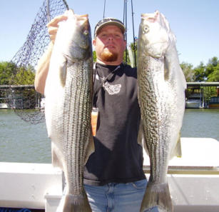 Two Huge Stripers Image